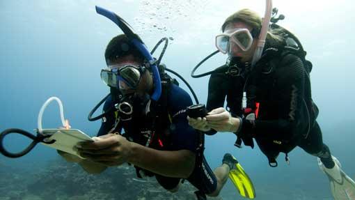 Continue Your Education - Sea Gypsy Divers, Ao Nang, Krabi Thailand