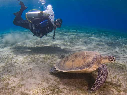 Diver showing great buoyancy control while observing a turtle
