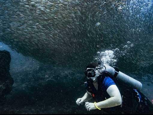 PADI Scuba Diver with big school of fish