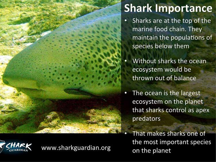 Shark Guardian Poster 2 - Sea Gypsy Divers, Ao Nang, Krabi Thailand