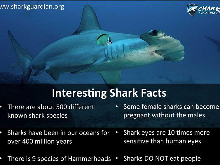 Shark Guardian Poster 3 - Sea Gypsy Divers, Ao Nang, Krabi Thailand