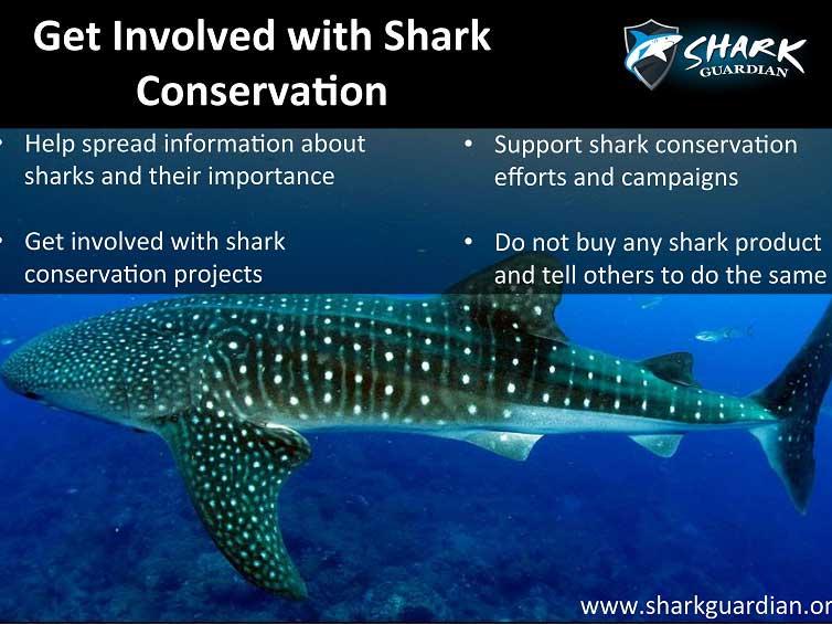 Shark Guardian Poster 4 - Sea Gypsy Divers, Ao Nang, Krabi Thailand