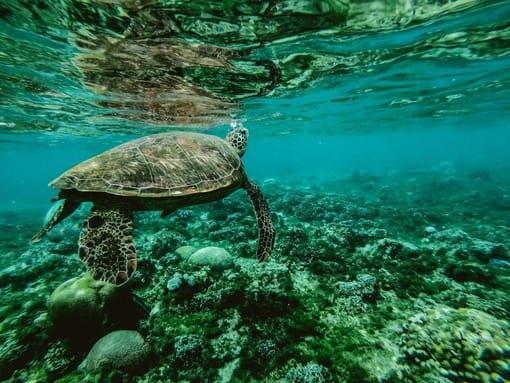 Sea Turtle Snorkeling in Krabi