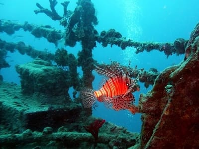 Lionfish on Wreck